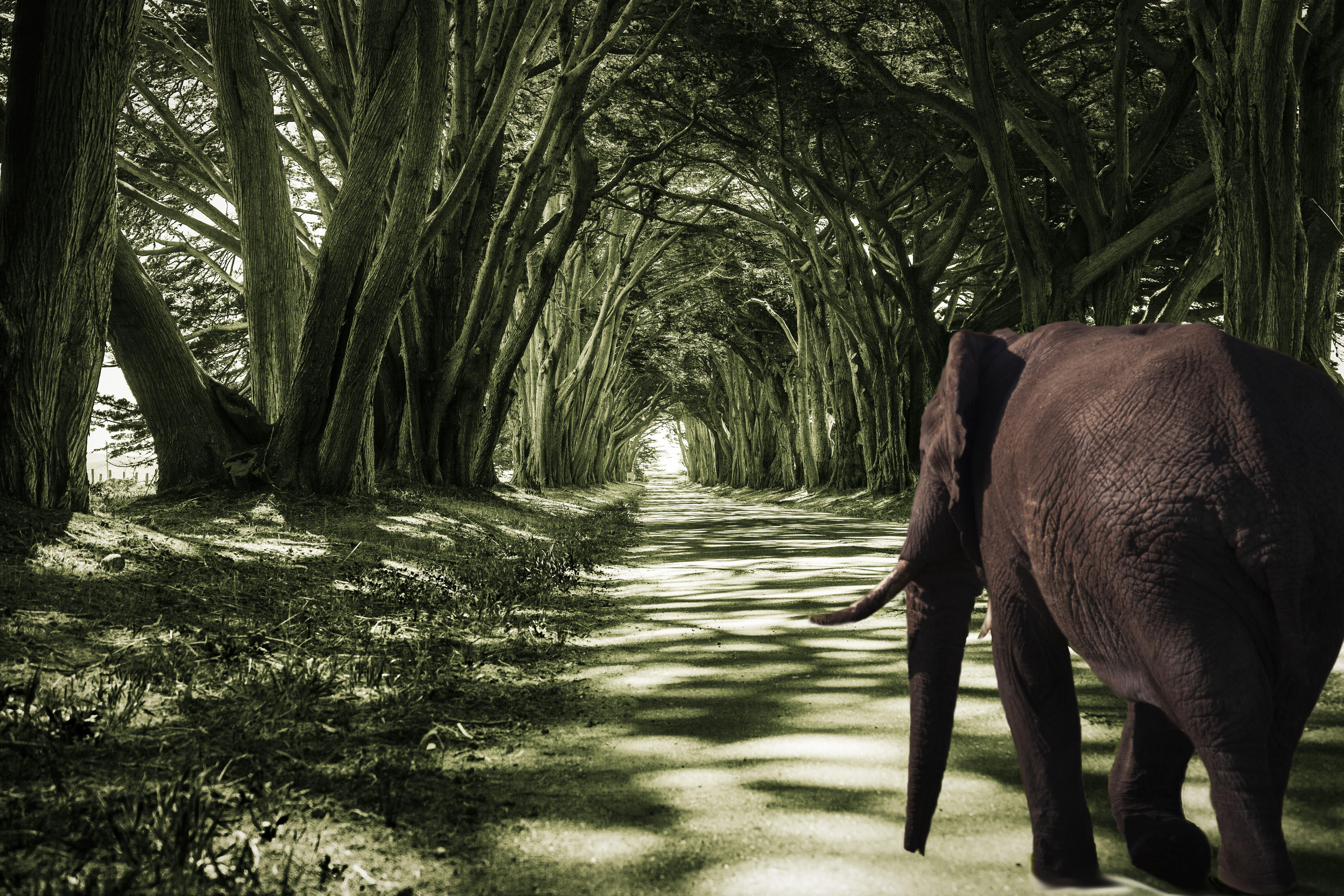 Elephant Time Travel