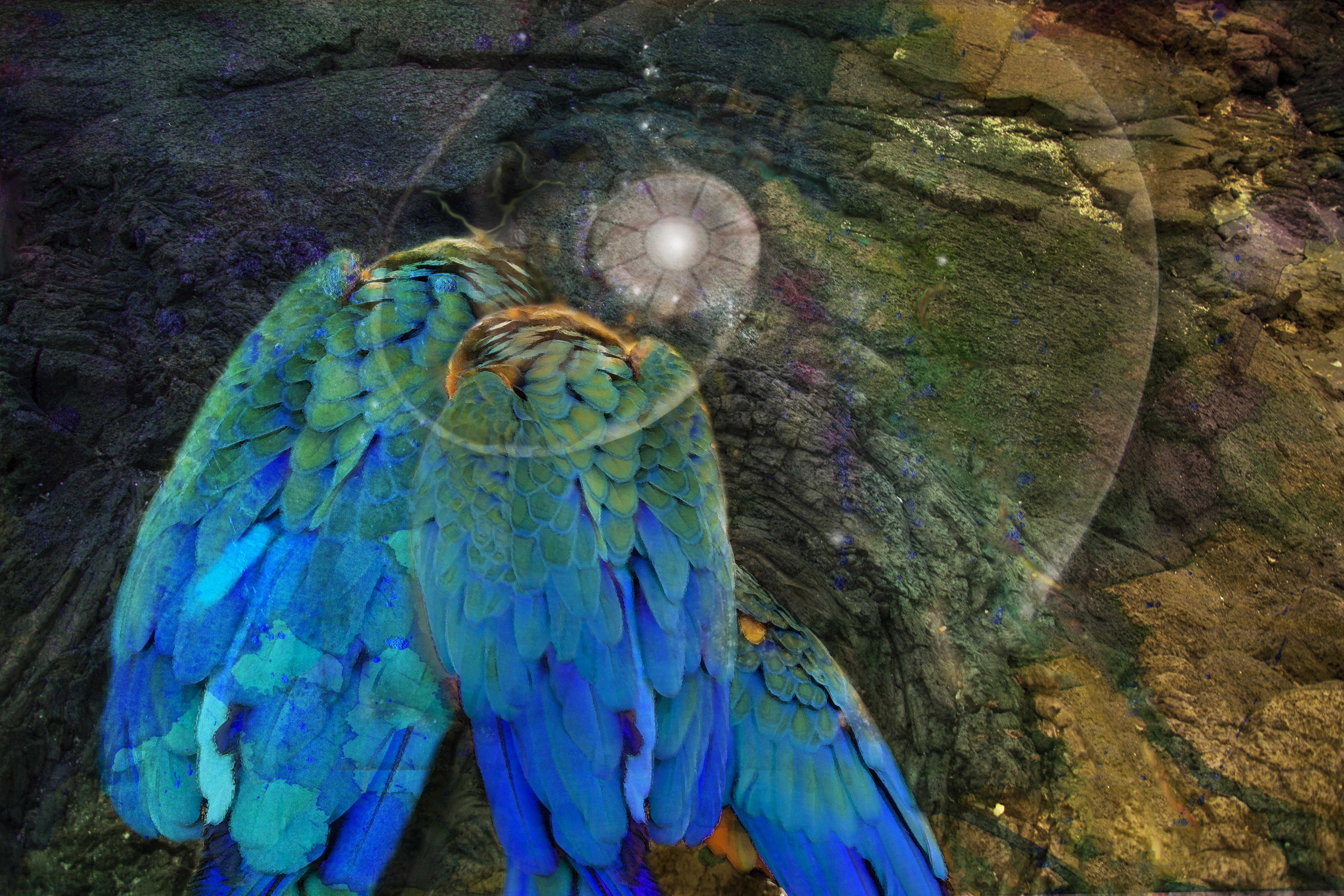 Parrot Council