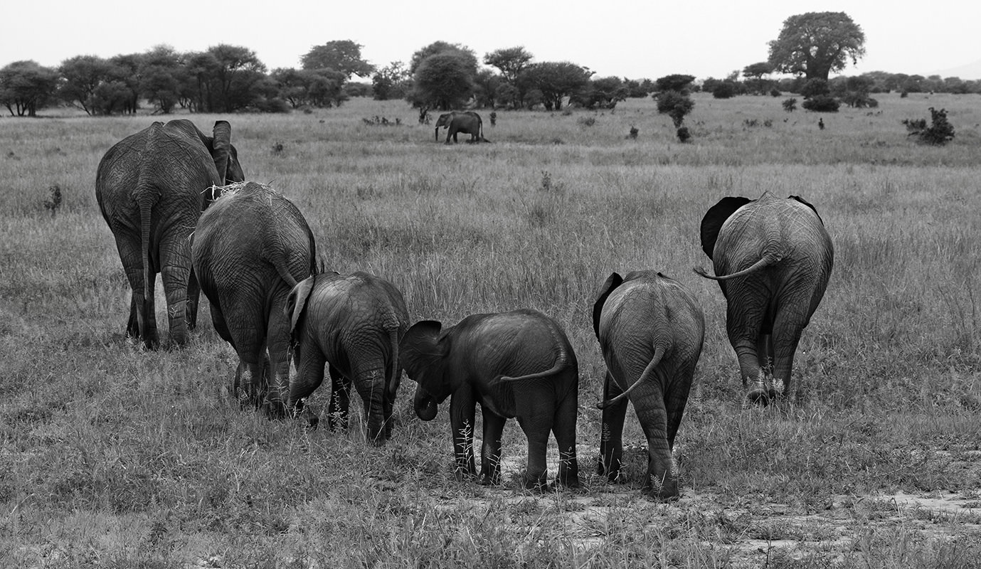 Elephant Cresent, Tanzania, Africa
