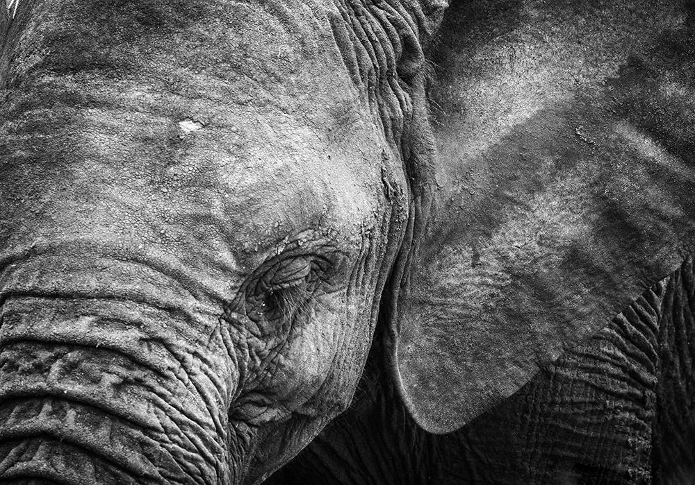 Elephant Face, Tanzania, Africa