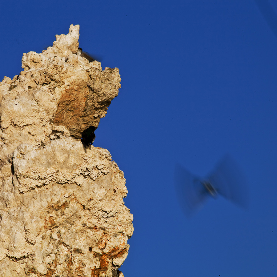 Flight, Mono Lake, CA