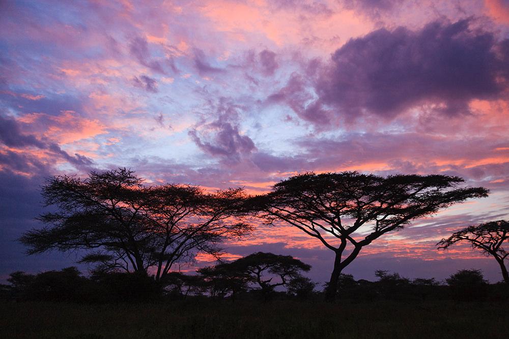 Acacia Sunset, Africa